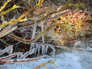 ヨセミテ国立公園 サンライズレークの寒い朝