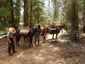 ヨセミテ国立公園のトレイル上で前方に馬が出現