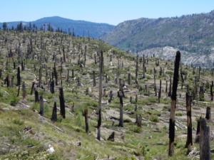 JMT レッズメドウ付近の山火事で燃えた森
